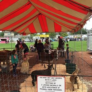 Fair Petting Zoo